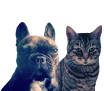 Pet insurance for cats, dogs and more