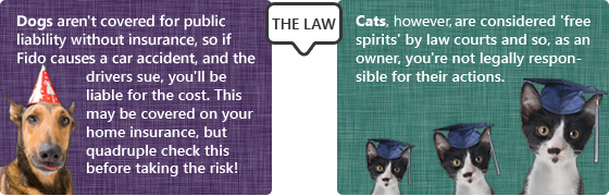 The law's different for cats and dogs