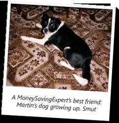 Martin Lewis' Dog, Smut