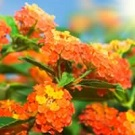 Park Promotions flower seeds
