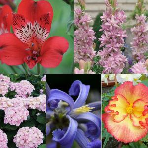 Thompson & Morgan 'Bumper Collection' of plants